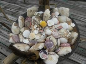 Shells to make a wish.
