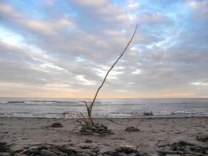 """Sea Anemone"", Sainte-Marie-Saint-Raphael, Lamèque Island, Canada - 2017"