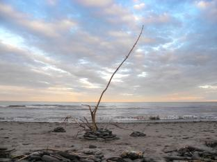 """""""Anémone de mer"""", Sainte-Marie-Saint-Raphael, Île Lamèque, Canada - 2017"""