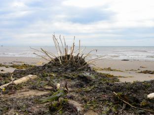 Sea Porcupine, Le Goulet, N.-B., Canada - 2018