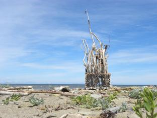 Bois en cage, Île de Miscou, N.-B. - 2020