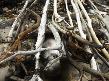 "Series ""Bone shells"""
